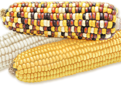 Indian corn-blend